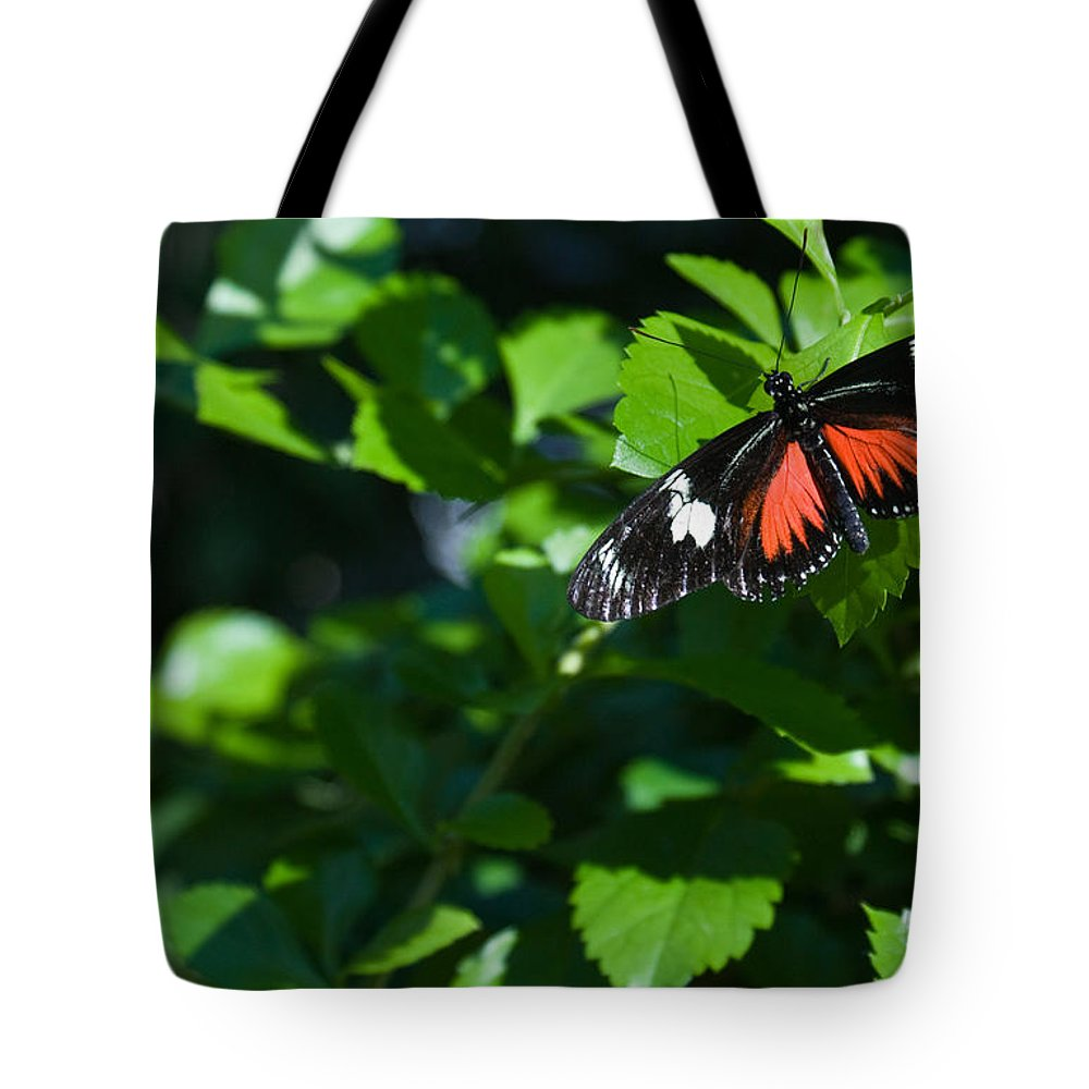 Tropical Tote Bag featuring the photograph Tropical Butterfly by Douglas Barnett