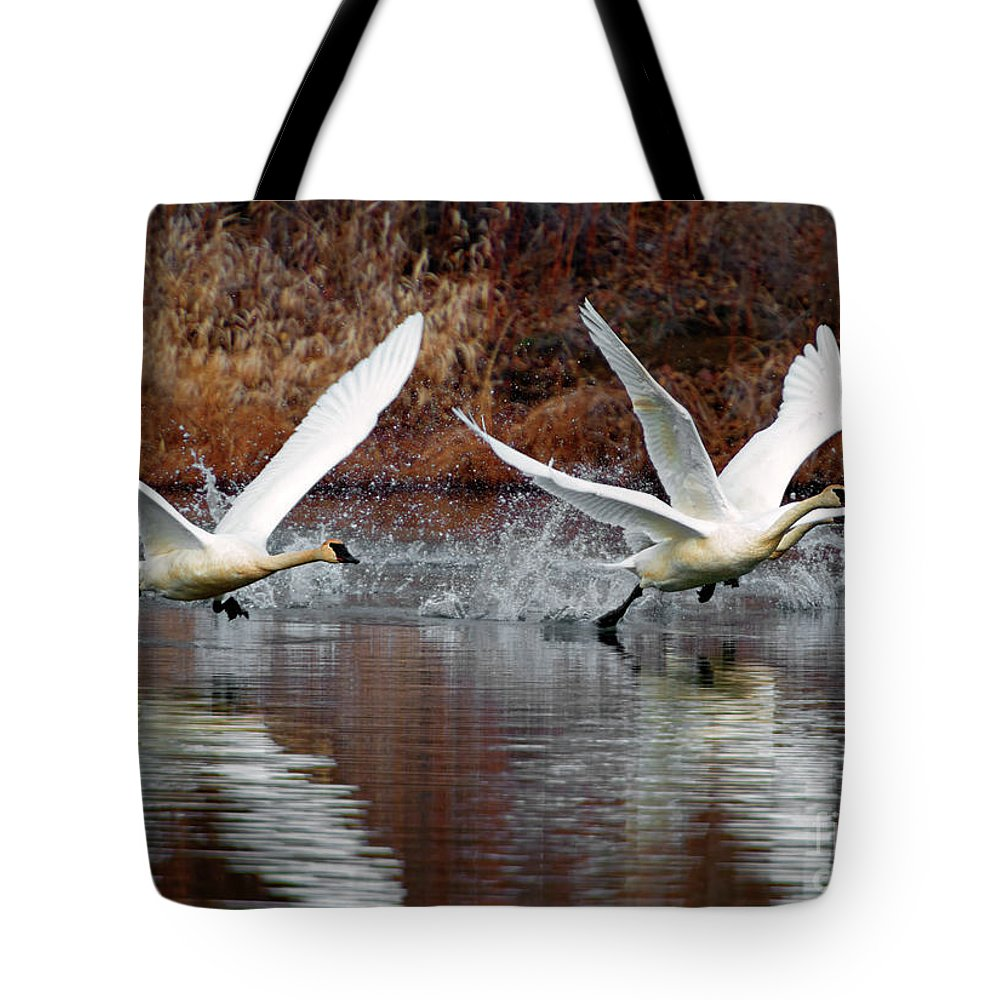 Swans Tote Bag featuring the photograph Walking On Water by Mike Dawson