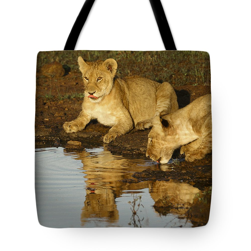 Lion Tote Bag featuring the photograph We're Thirsty by Michele Burgess