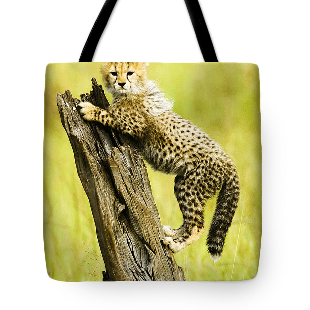Africa Tote Bag featuring the photograph What A Cutie by Michele Burgess