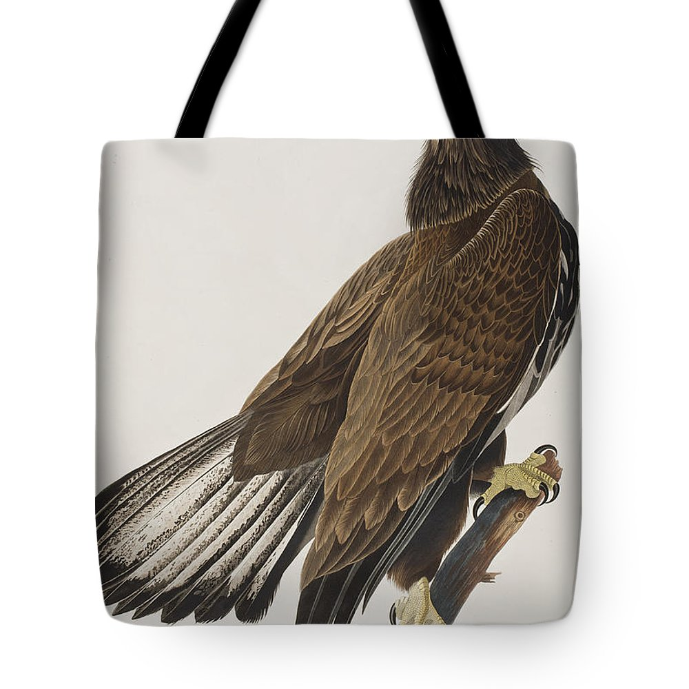 White Headed Eagle Tote Bag featuring the painting White-headed Eagle by John James Audubon