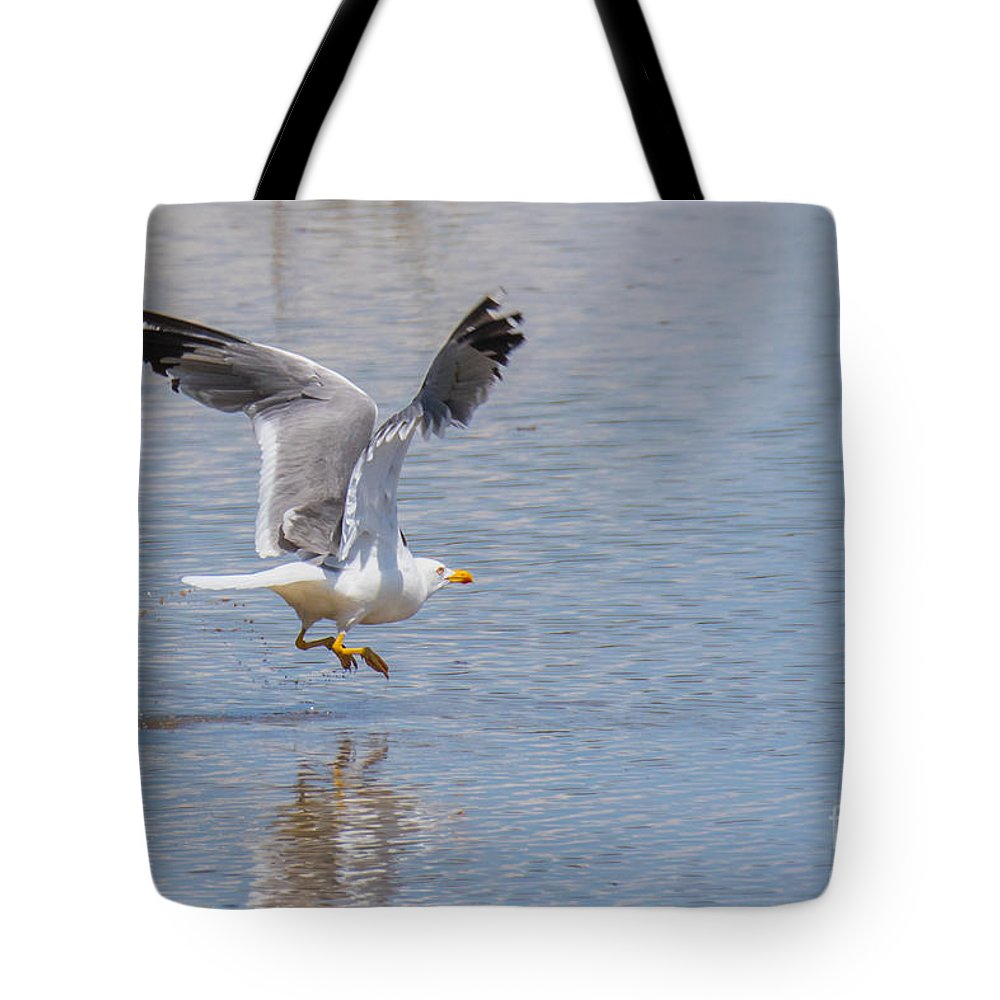 Animalia Tote Bag featuring the photograph Yellow Legged Gull Take Off by Jivko Nakev