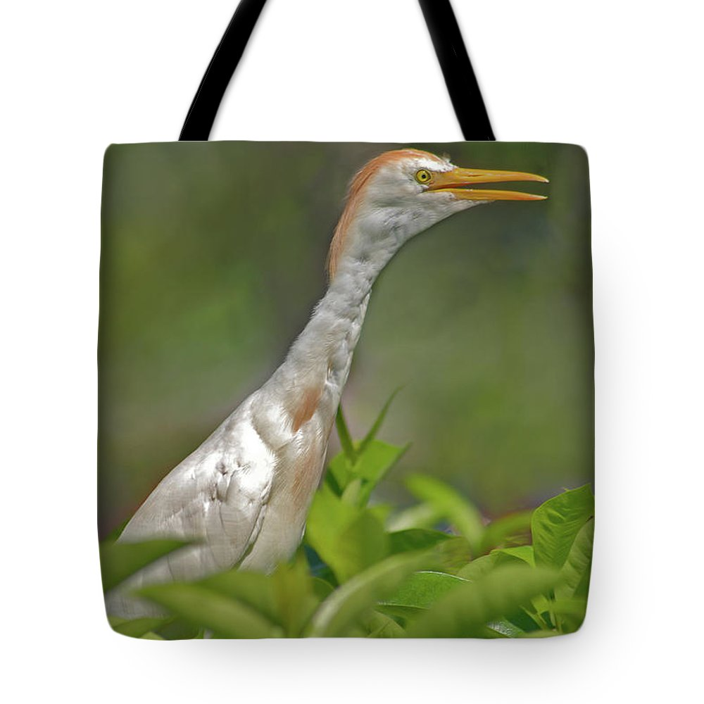 Cattle Egret Tote Bag featuring the photograph 11- Cattle Egret by Joseph Keane
