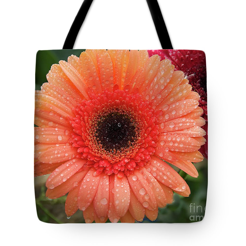 Flowers Tote Bag featuring the photograph Two Gerbers by Elvira Ladocki