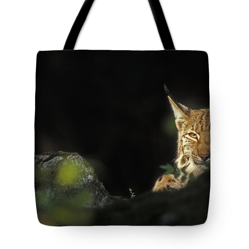 Eurasian Lynx Tote Bag featuring the photograph 151001p105 by Arterra Picture Library