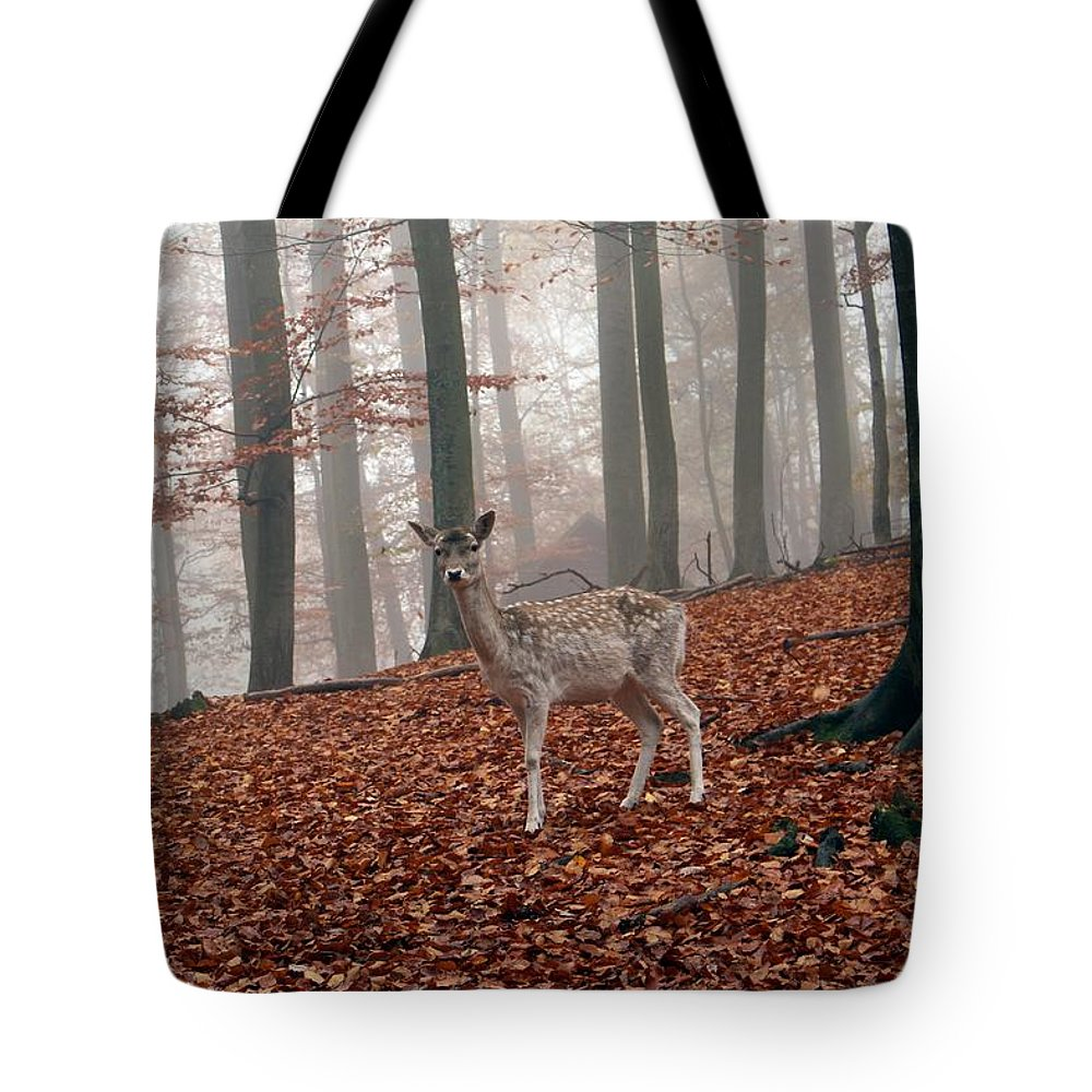 Bambi Tote Bag featuring the photograph Deer by FL collection
