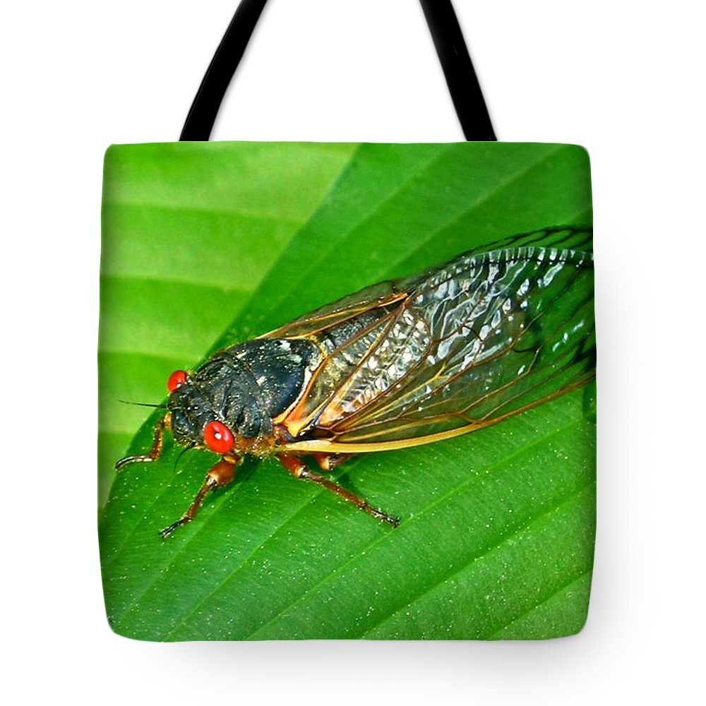 17 Tote Bag featuring the photograph 17 Year Periodical Cicada by Douglas Barnett