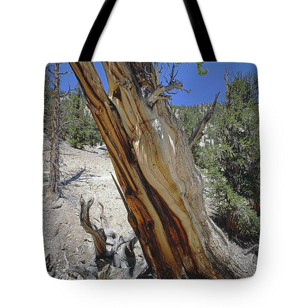 Methuselah Tree Tote Bag featuring the photograph 1n6956 Methuselah Tree by Ed Cooper Photography