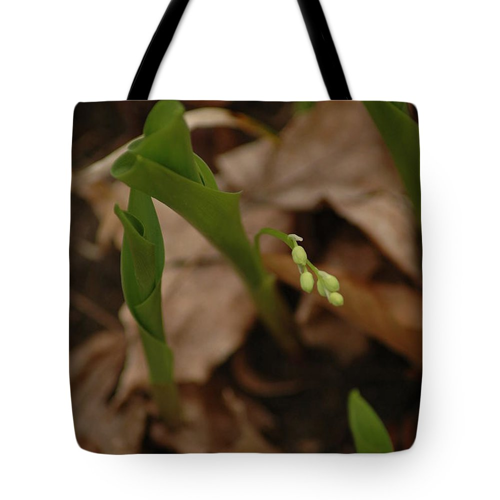 Usa Tote Bag featuring the photograph 1st Lily Of Spring by LeeAnn McLaneGoetz McLaneGoetzStudioLLCcom