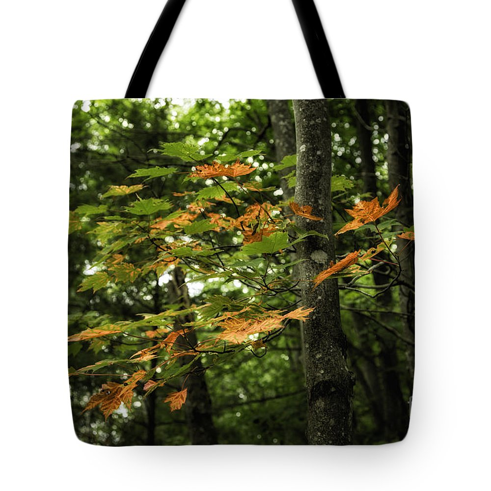 Michigan Tote Bag featuring the photograph A Touch Of Autumn by Timothy Hacker
