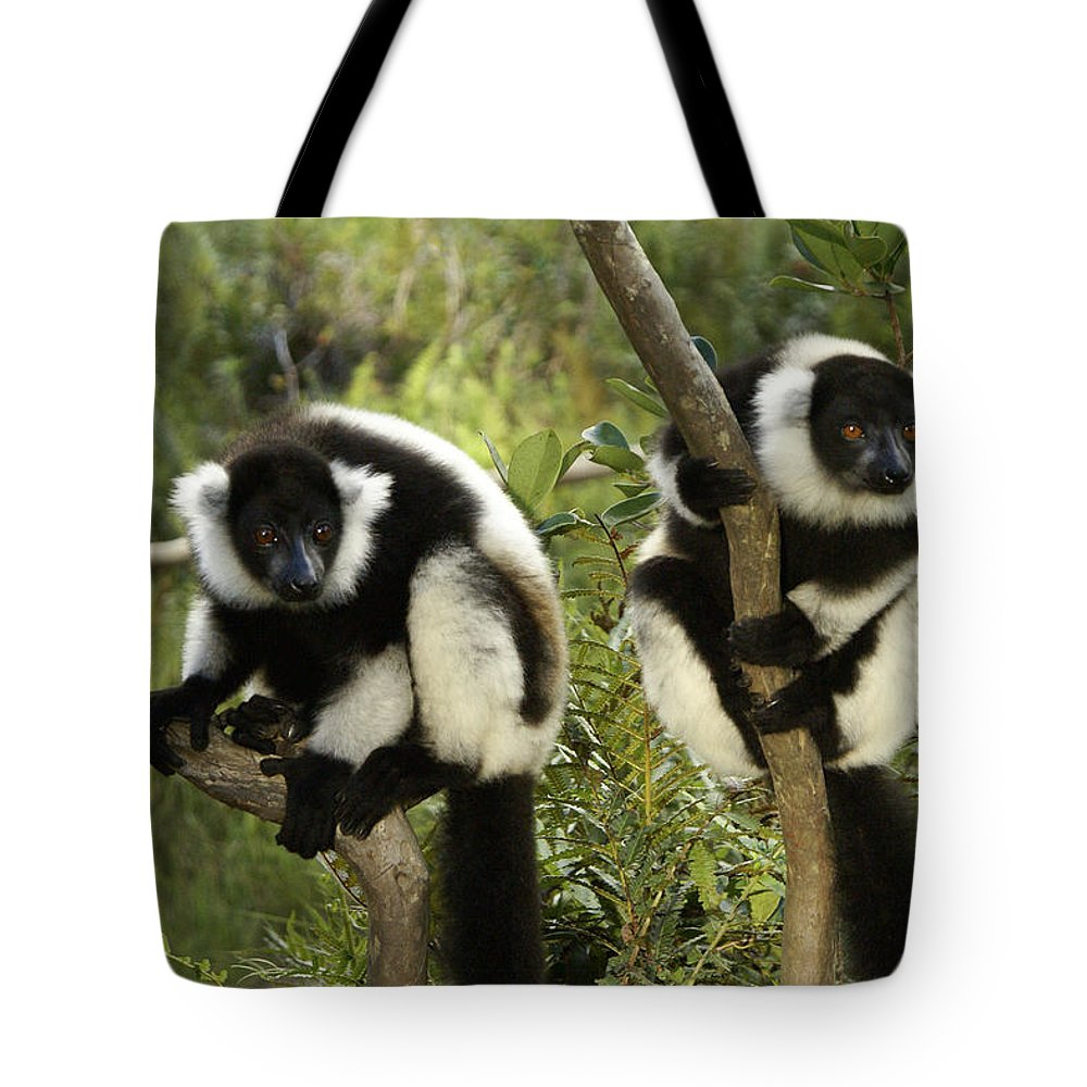 Madagascar Tote Bag featuring the photograph Black And White Ruffed Lemur by Michele Burgess