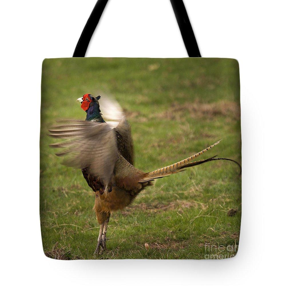 Pheasant Tote Bag featuring the photograph Crowing Pheasant by Angel Ciesniarska