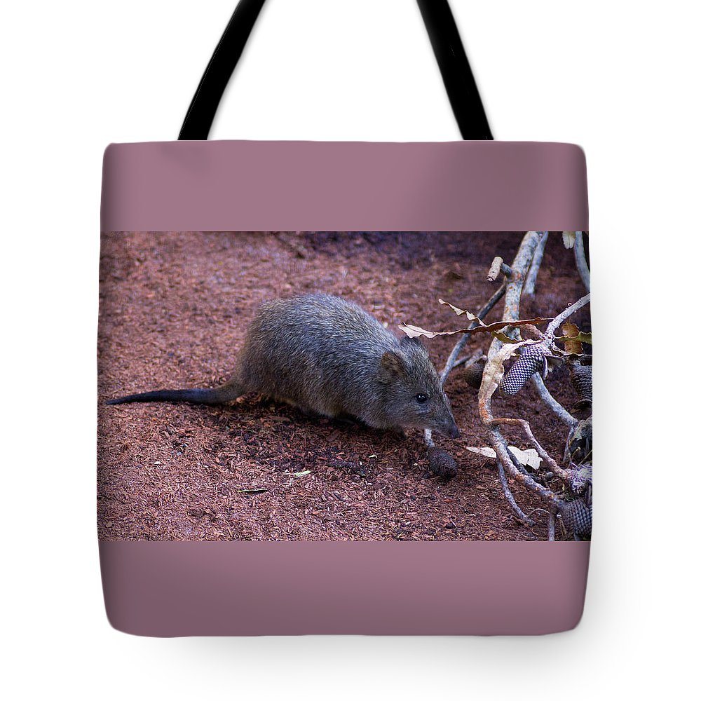 Potoroo Tote Bag featuring the photograph Cute Little One by Tania Read