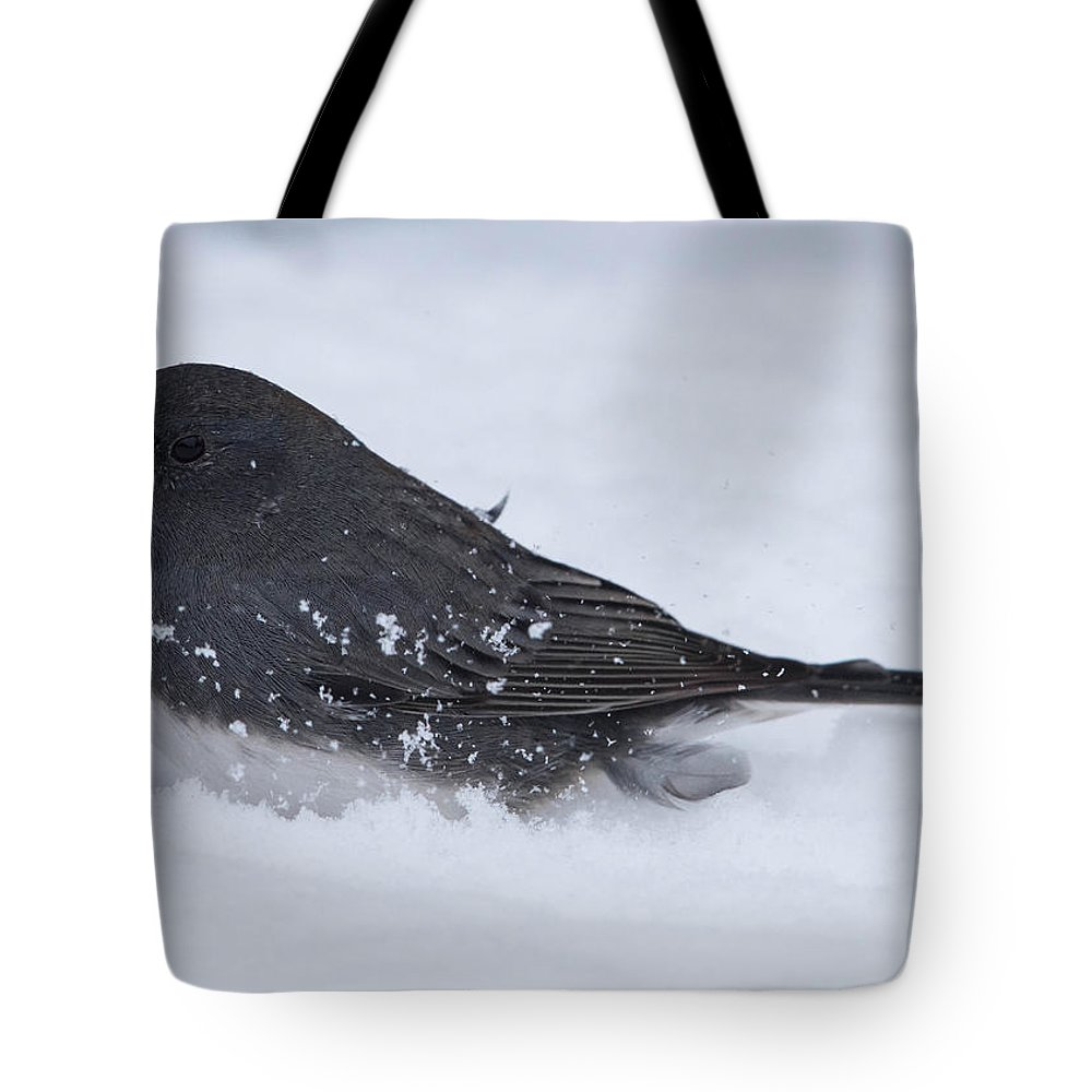 Dark-eyed Junco Tote Bag featuring the photograph Dark Eyed Junco by MCM Photography