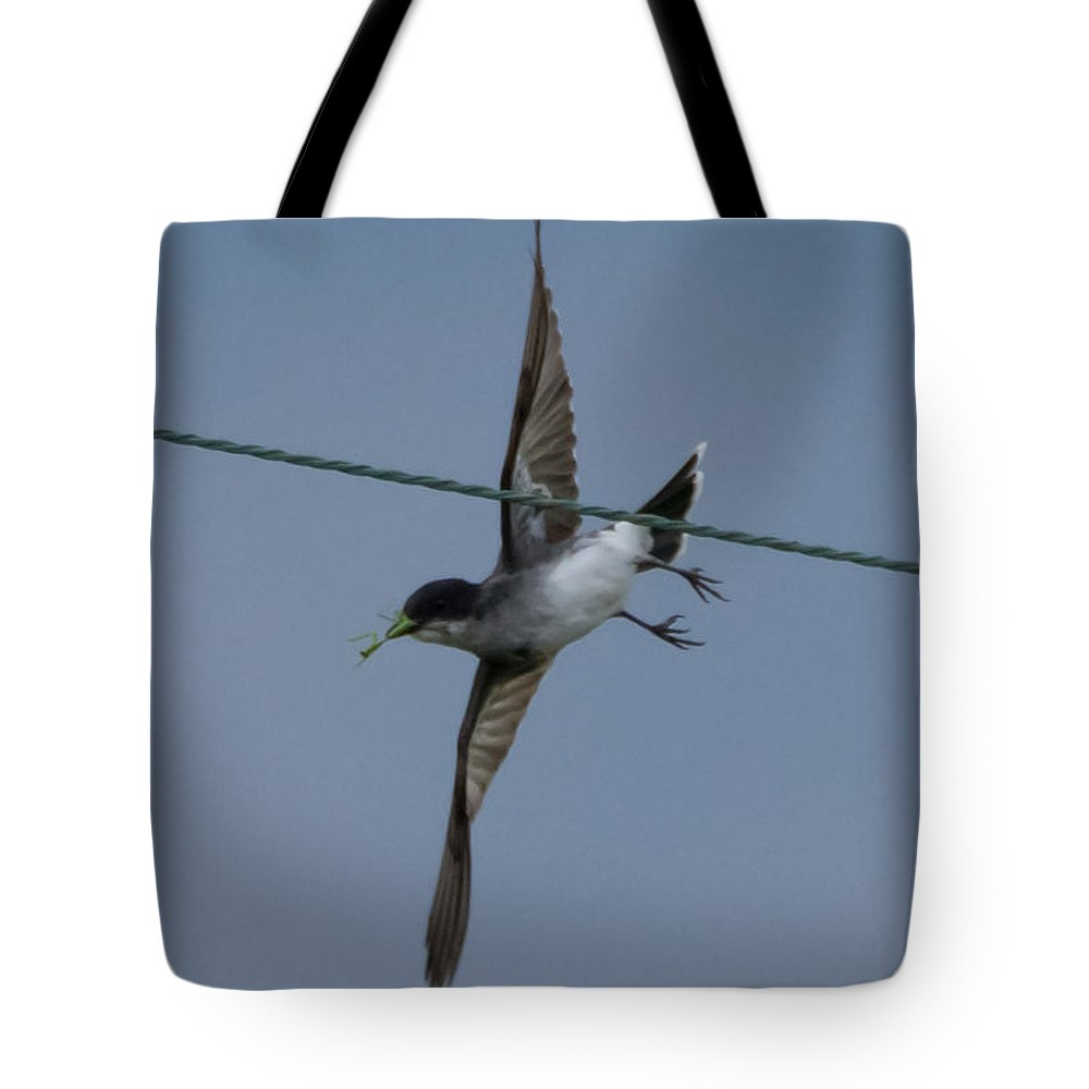 Eastern Kingbird Tote Bag featuring the photograph Eastern Kingbird by Jan M Holden