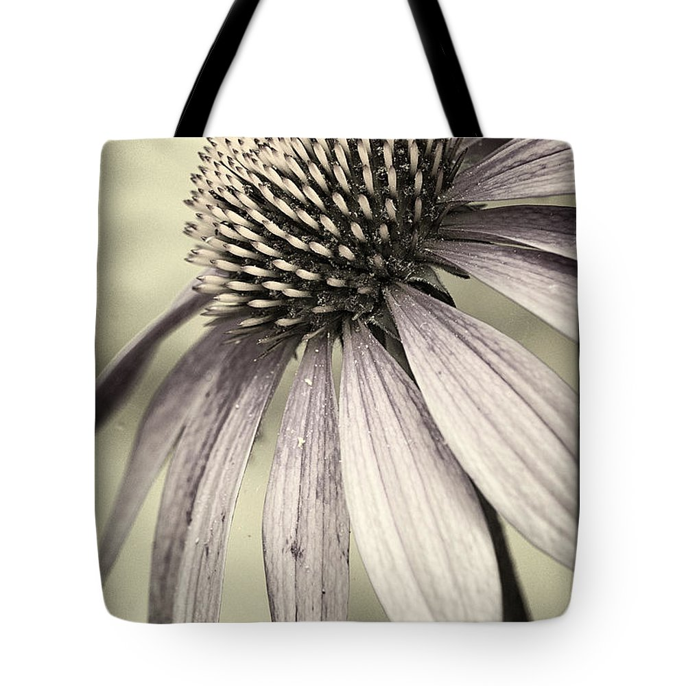 Coneflower Tote Bag featuring the photograph Evening Sun II by Robert Fawcett