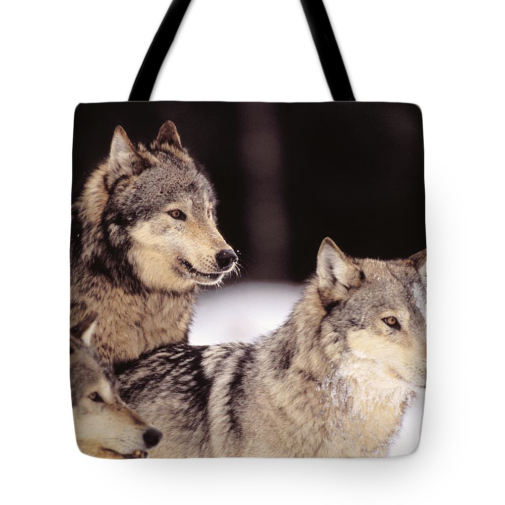 Afternoon Tote Bag featuring the photograph Gray Wolves by John Hyde - Printscapes