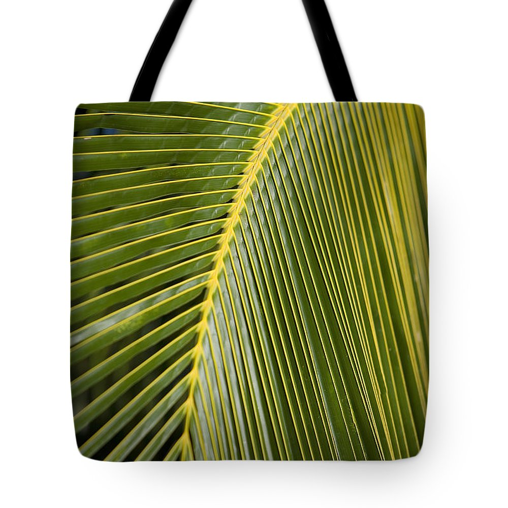 Angle Tote Bag featuring the photograph Green Palm Leaf by Ron Dahlquist - Printscapes