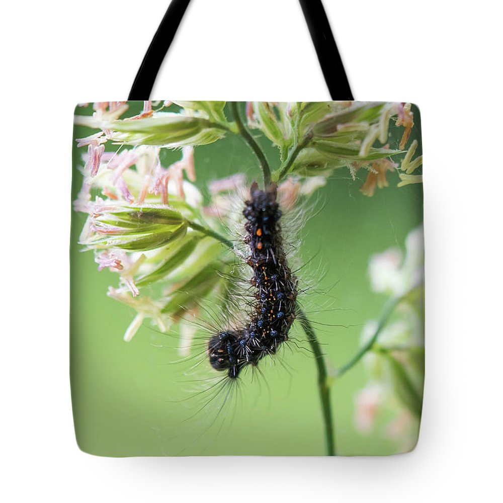 America Tote Bag featuring the photograph Gypsy Moth Caterpillar by Clifford Pugliese