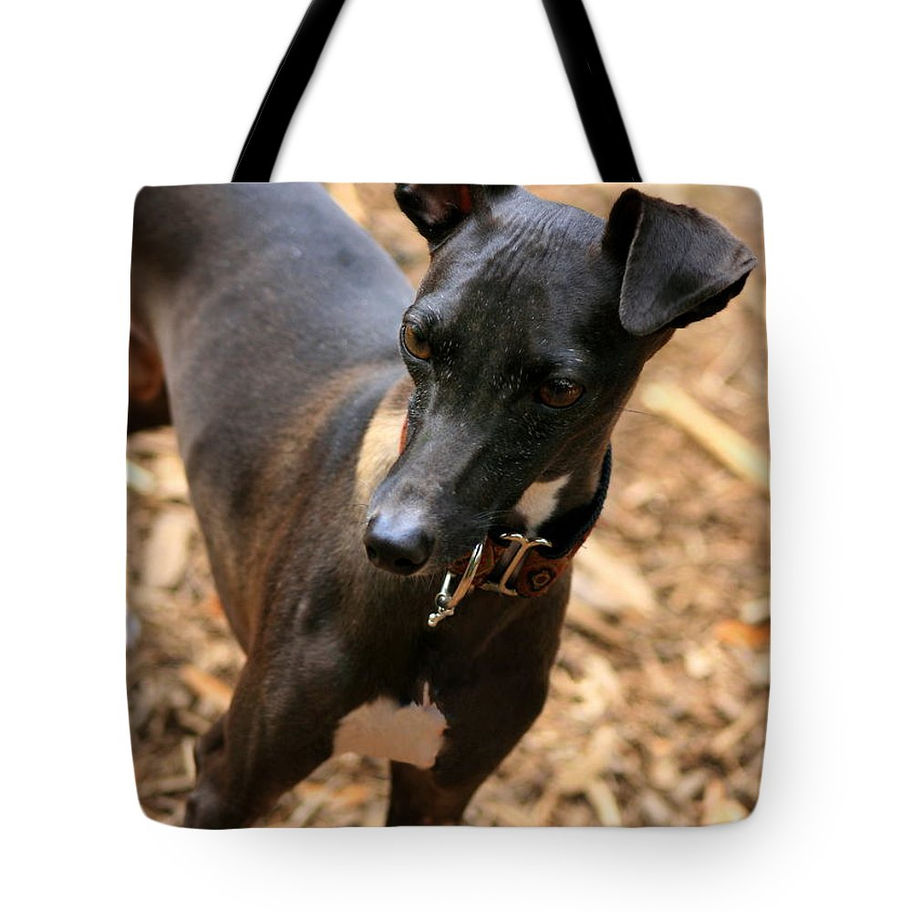 Editorial Tote Bag featuring the photograph Italian Greyhound by Angela Rath