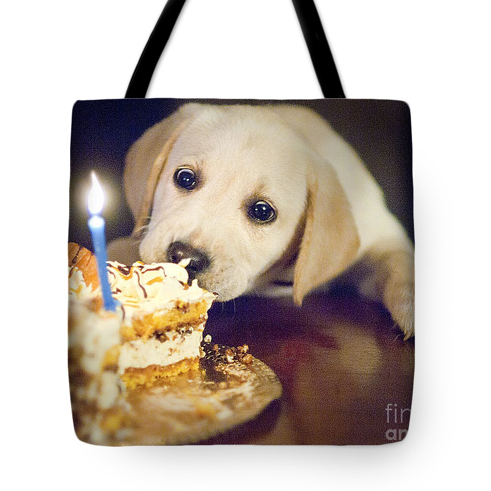 Labrador Tote Bag featuring the photograph Labrador by Romeo Lombardi