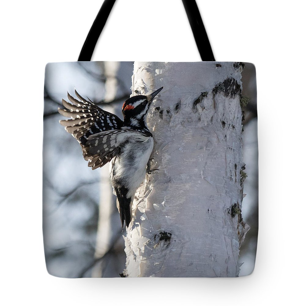 Woodpecker Tote Bag featuring the photograph Male Hairy Woodpecker by Dee Carpenter