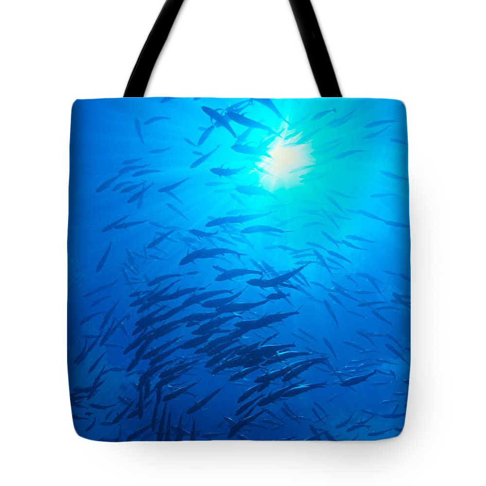 C1925 Tote Bag featuring the photograph Micronesia Marine Life by Ed Robinson - Printscapes