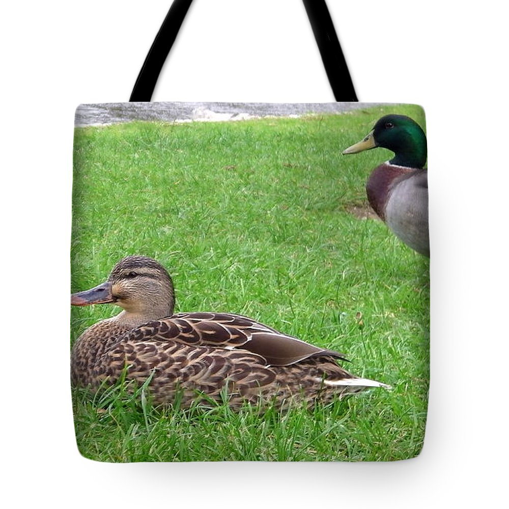 New Zealand Tote Bag featuring the photograph New Zealand - Pair Of Mallard Duck by Jeffrey Shaw
