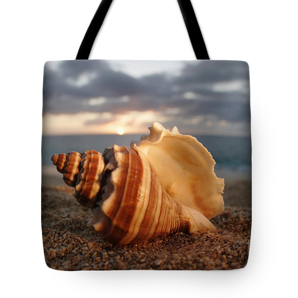 Background Tote Bag featuring the photograph North Shore Seashell by Vince Cavataio - Printscapes