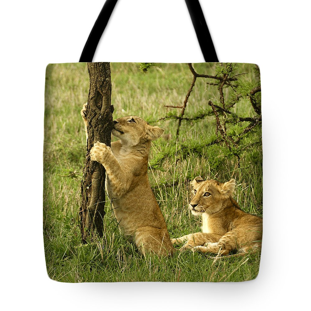Lion Tote Bag featuring the photograph Playtime by Michele Burgess