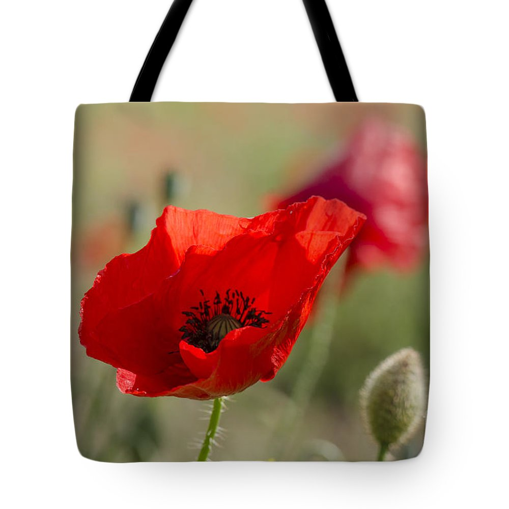 Poppy Tote Bag featuring the photograph Poppies In Field In Spring by Perry Van Munster
