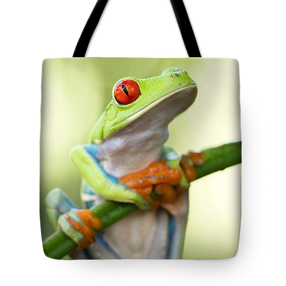 Red Eyed Tree Frog Tote Bag featuring the photograph Red Eyed Tree Frog by Kim Gates