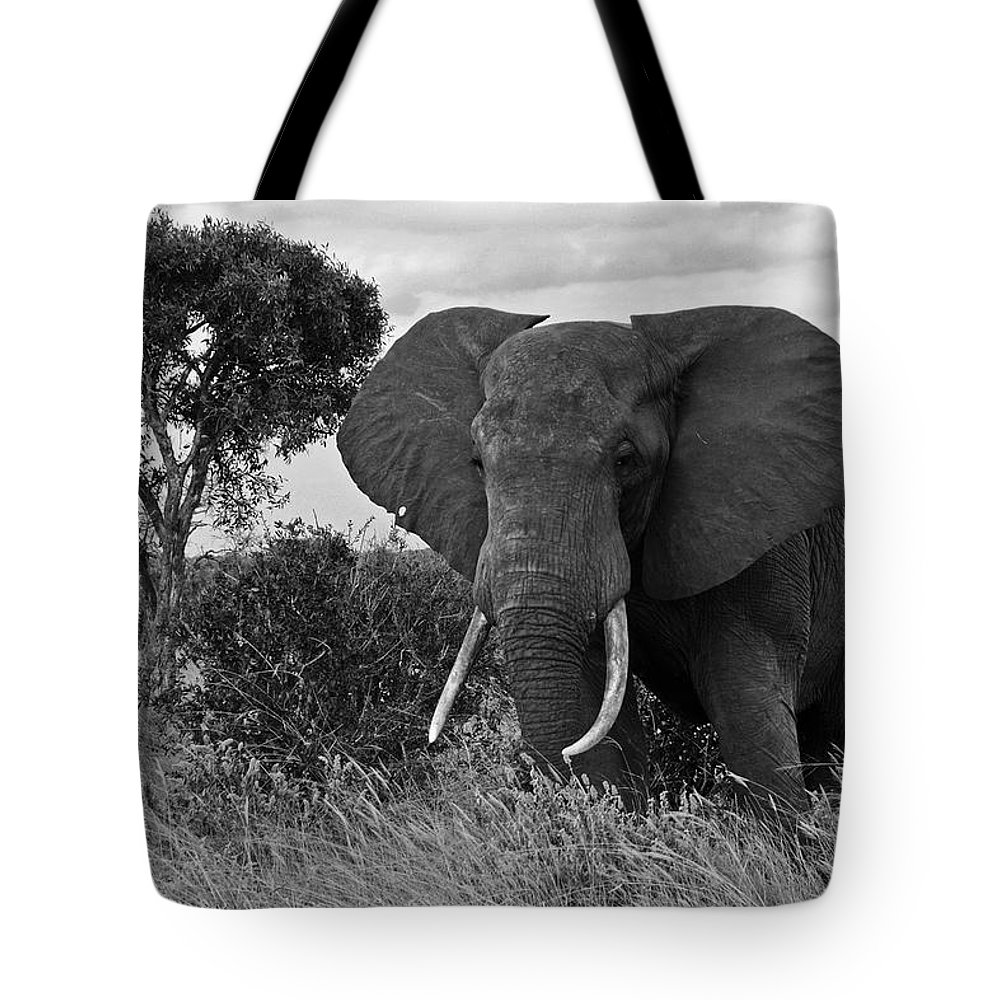 Africa Tote Bag featuring the photograph The Old Bull by Michele Burgess