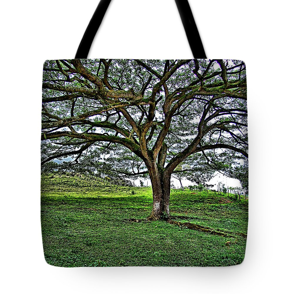 Tote Bag featuring the photograph Tree by Galeria Trompiz