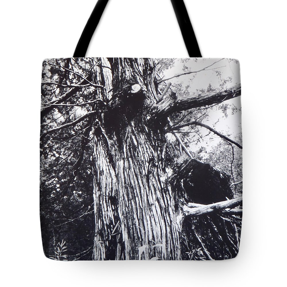 Tree Tote Bag featuring the painting Tree by Troy Thomas