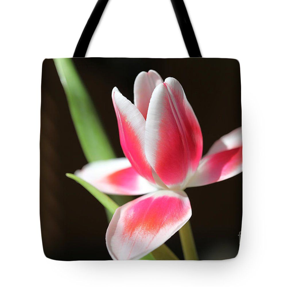 Tags: Tote Bag featuring the photograph Tulip by Amanda Barcon