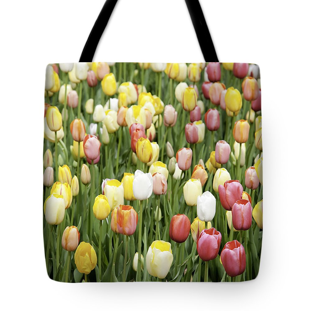 Garden Tote Bag featuring the photograph Tulip Garden by Anthony Totah