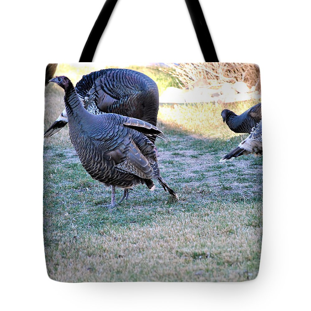 Wildlife Tote Bag featuring the photograph Wild Turkeys. by Oscar Williams