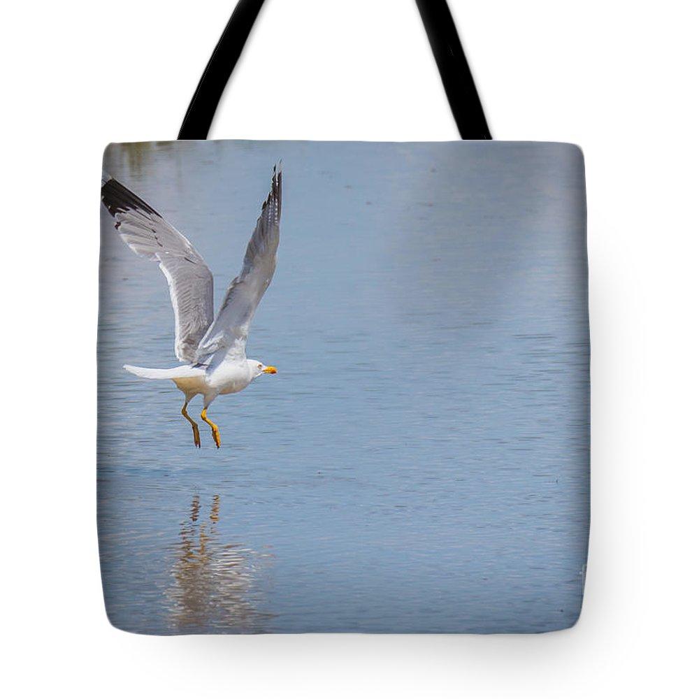 Animalia Tote Bag featuring the photograph Yellow Legged Gull Take Off by Jivko Nakev