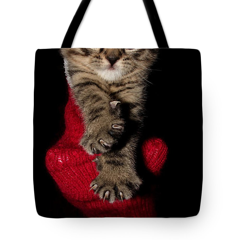 Animal Tote Bag featuring the photograph 2010 Stocking Cat 3 by Robert Morin