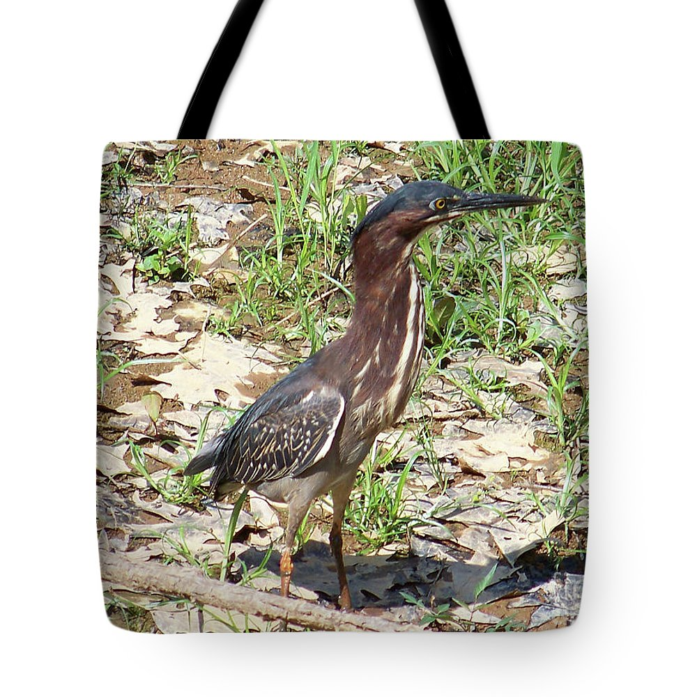 Birds Tote Bag featuring the photograph 2014-baby Green Heron by Martha Abell
