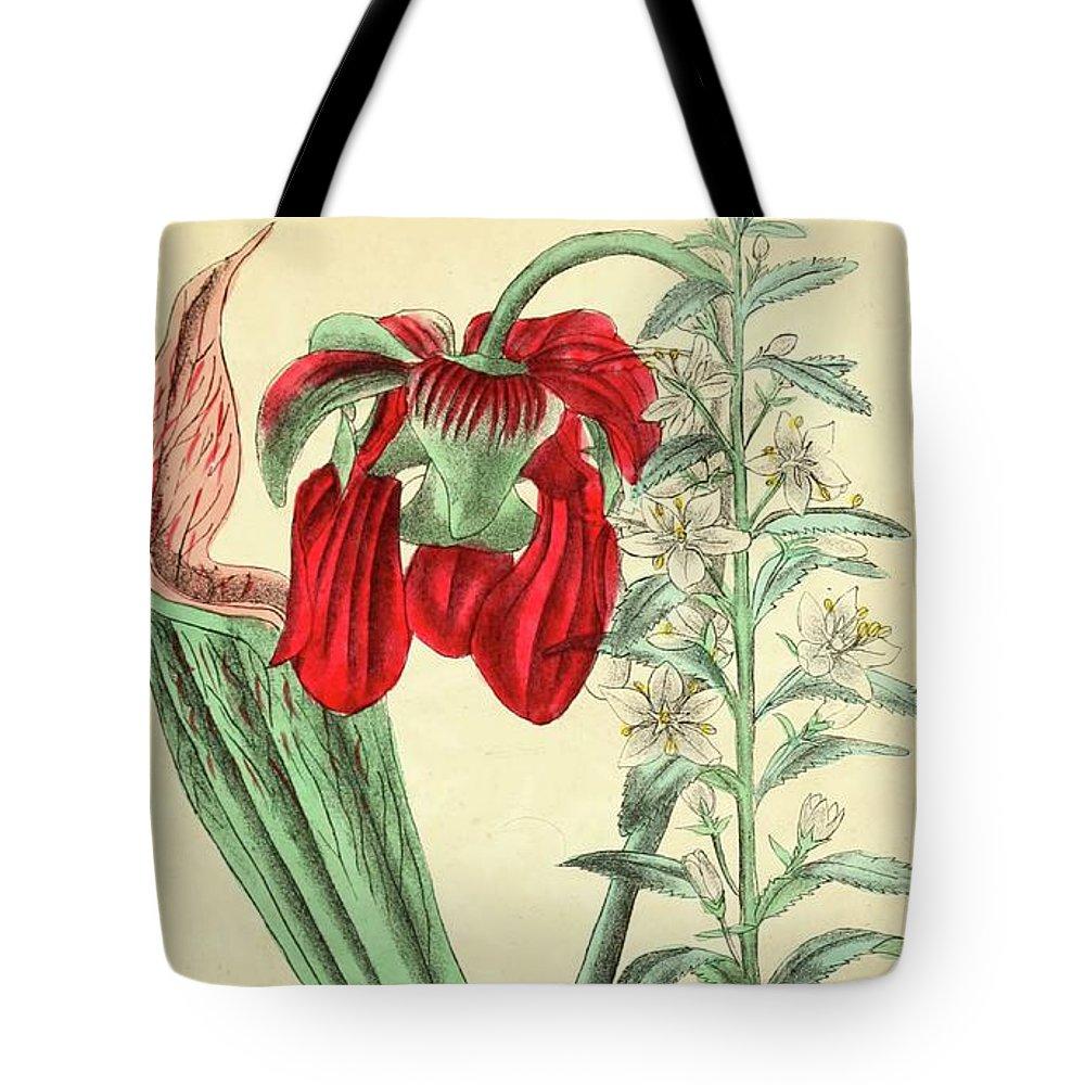 Botanical Tote Bag featuring the digital art Vintage Botanical Illustration by Alexandr Testudo