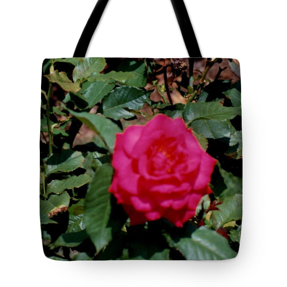Beautiful Rose Prints Tote Bag featuring the photograph Beautiful Rose by Ruth Housley