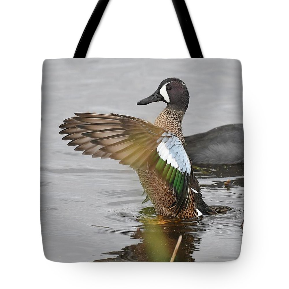Duck Tote Bag featuring the photograph Blue-winged Teal by David Campione
