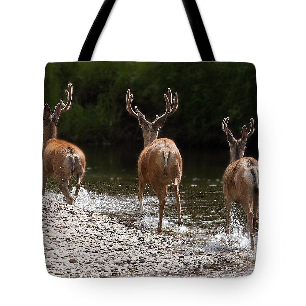 Wildlife Tote Bag featuring the photograph 3 Bucks by Russell Smith