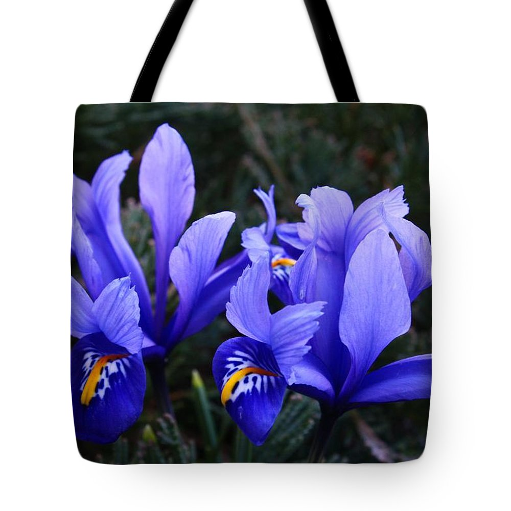 Mosaic Tote Bag featuring the photograph Caesar's Brother by Kathryn Meyer