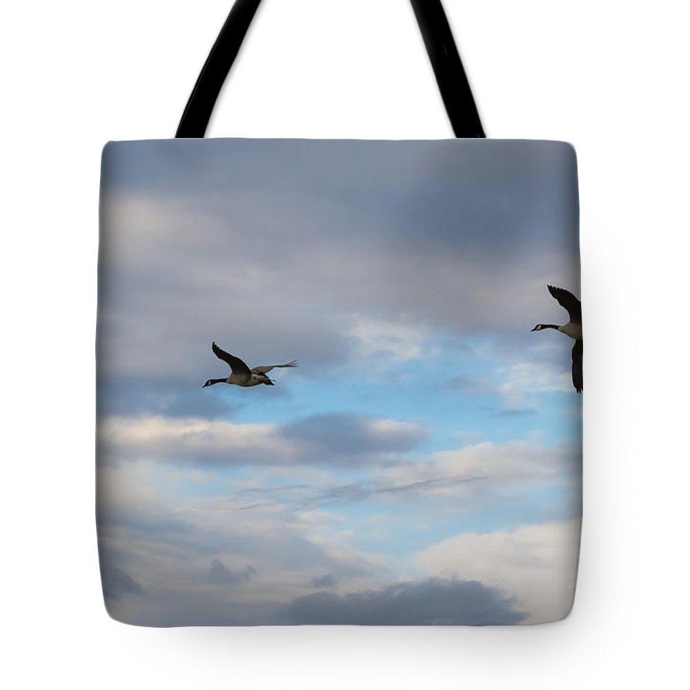 Canada Geese Tote Bag featuring the photograph Canada Geese by Jan M Holden