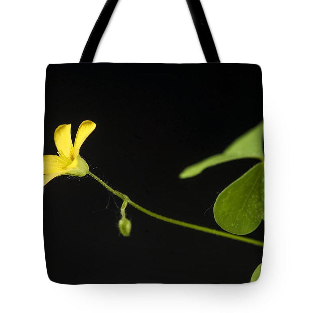Nobody Tote Bag featuring the photograph Creeping Woodsorrel by Donald Erickson