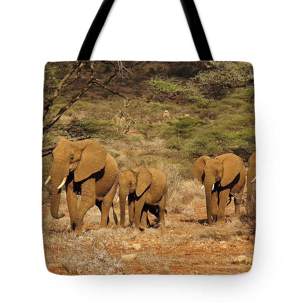Africa Tote Bag featuring the photograph Elephant Parade by Michele Burgess