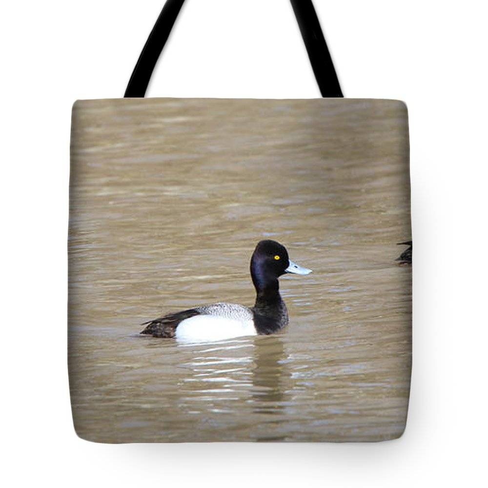 Jack Schultz Photography Tote Bag featuring the photograph 3 Greater Scaup 4060 by Jack Schultz